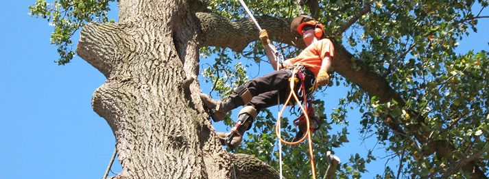Tree Removal Service | Tree Cutting |Spring The Woodlands Texas